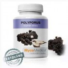 Polyporus-choros-optimalni-